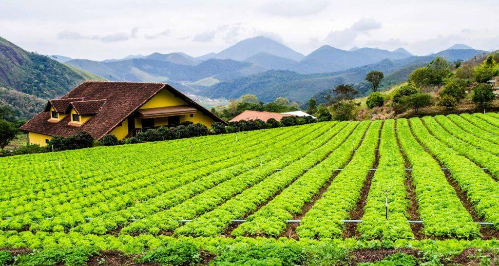 Agriculture Farm Brazil